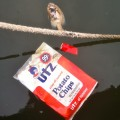 Fish floating with trash in Baltimore Harbor